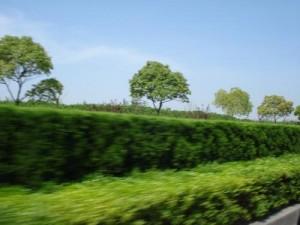 哥伦比亚人看中国高速公路的绿化