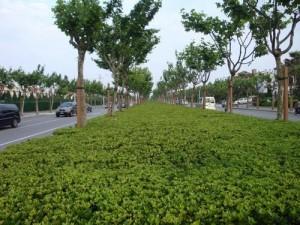 印度人看中国高速公路:公路中间的隔离绿化带