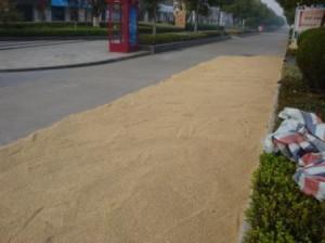 印度人看中国:中国人在公路上晒稻子
