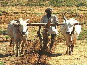 中国农业和印度农业如何天差地别:印度农业生产效率低下