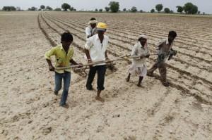 印度农民在耕种