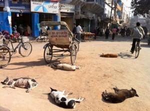 印度街头上的流浪狗