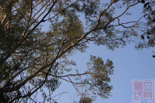 一念地狱,一念天堂 印度行(一)初到德里   抬起头来,绿树成荫