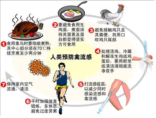 人类如何预防禽流感