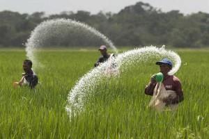 世界前20大稻米生产国,中国第一印度第二