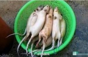中国打掉将老鼠肉当羊肉卖的犯罪团伙